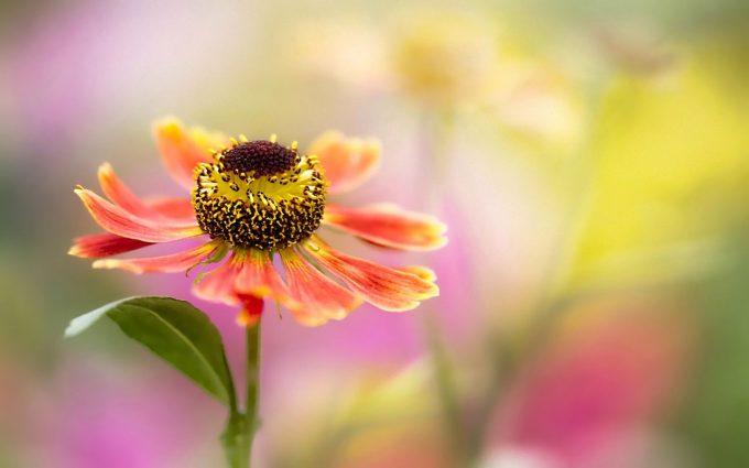 hazy flower