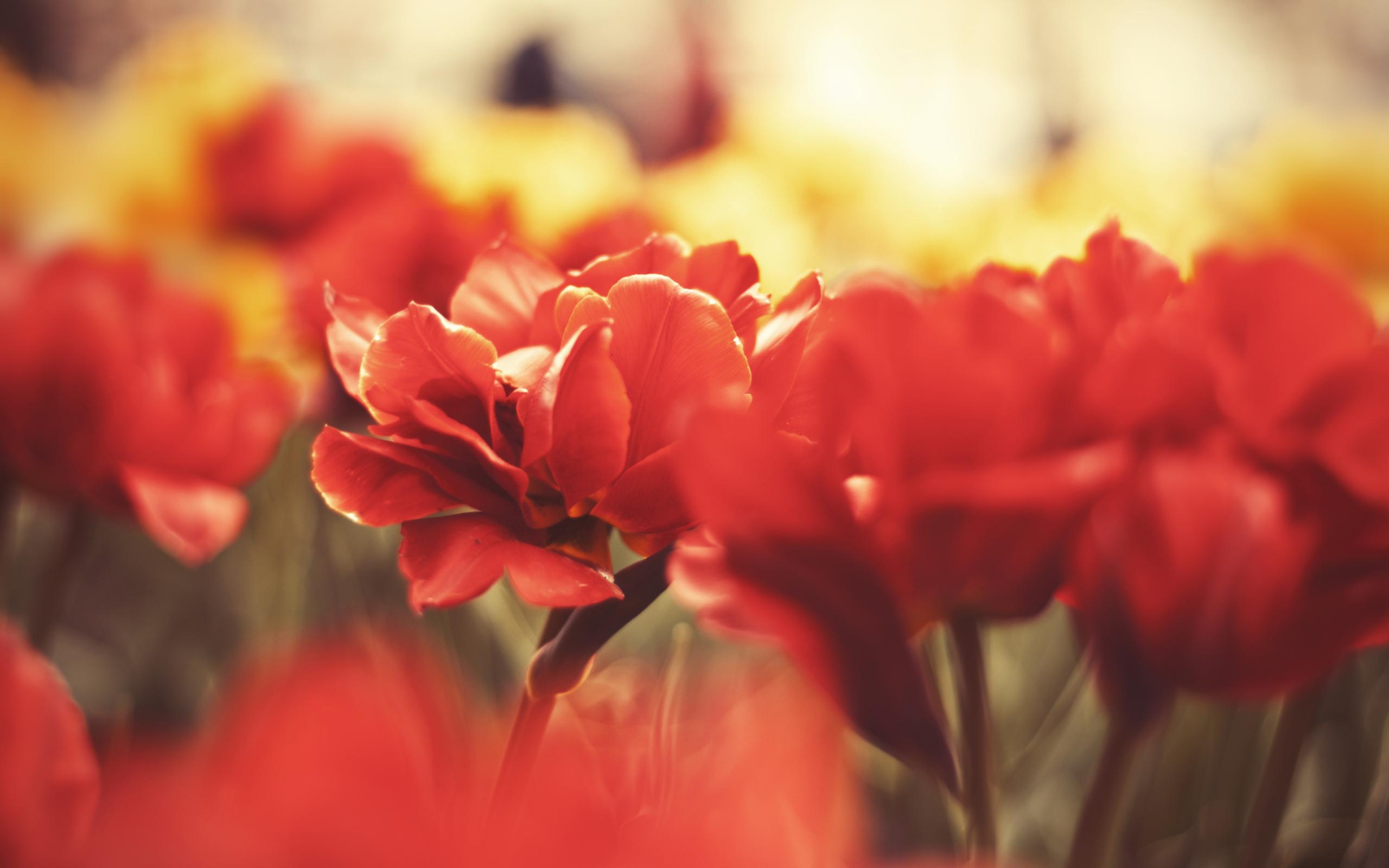 hd macro flowers