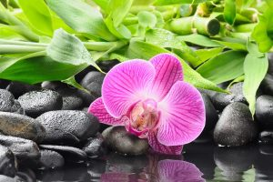 hd orchid wallpaper