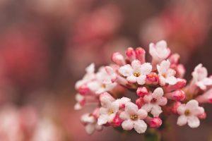 hd pink flowers