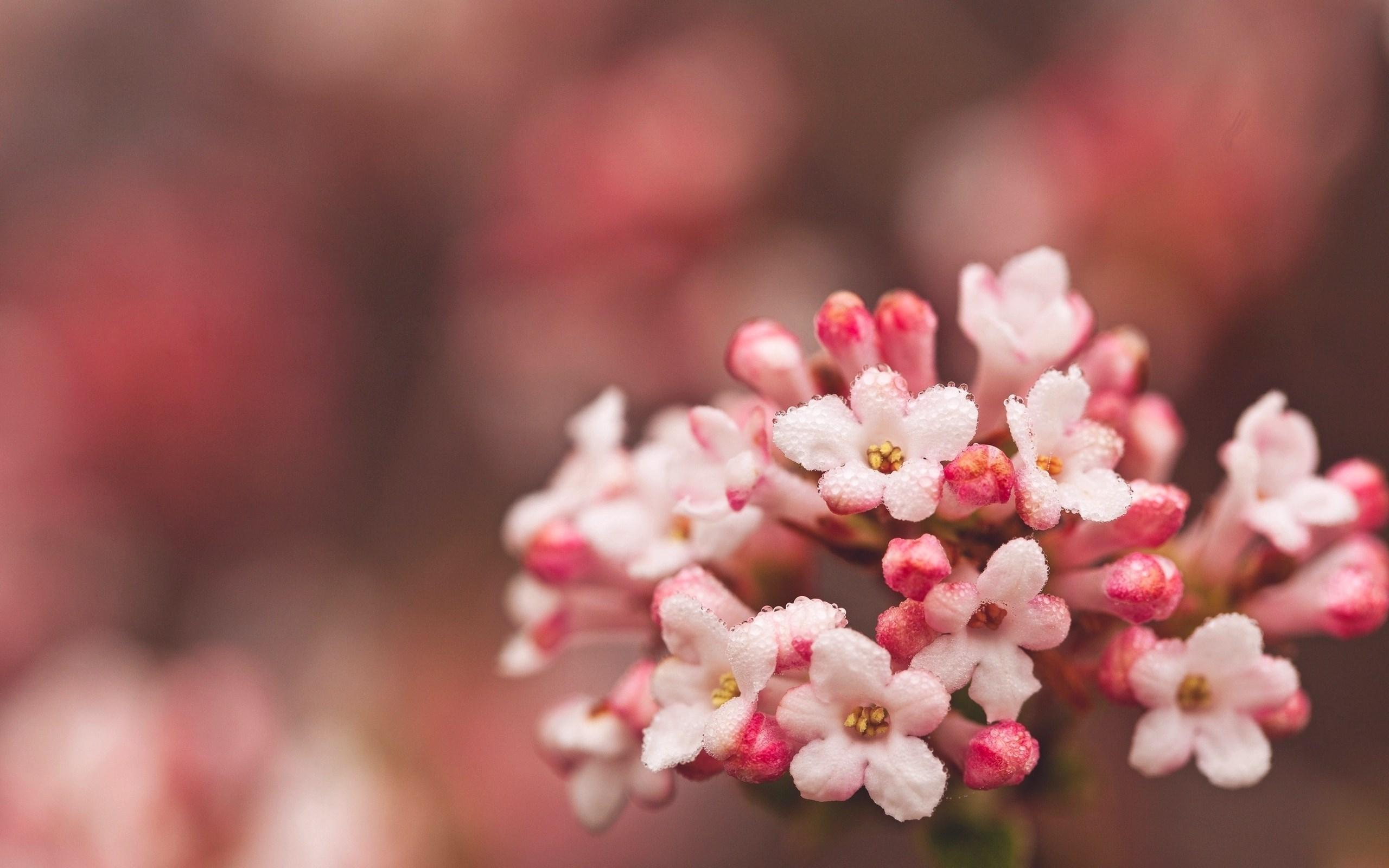 Hd Pink Flowers - HD Desktop Wallpapers