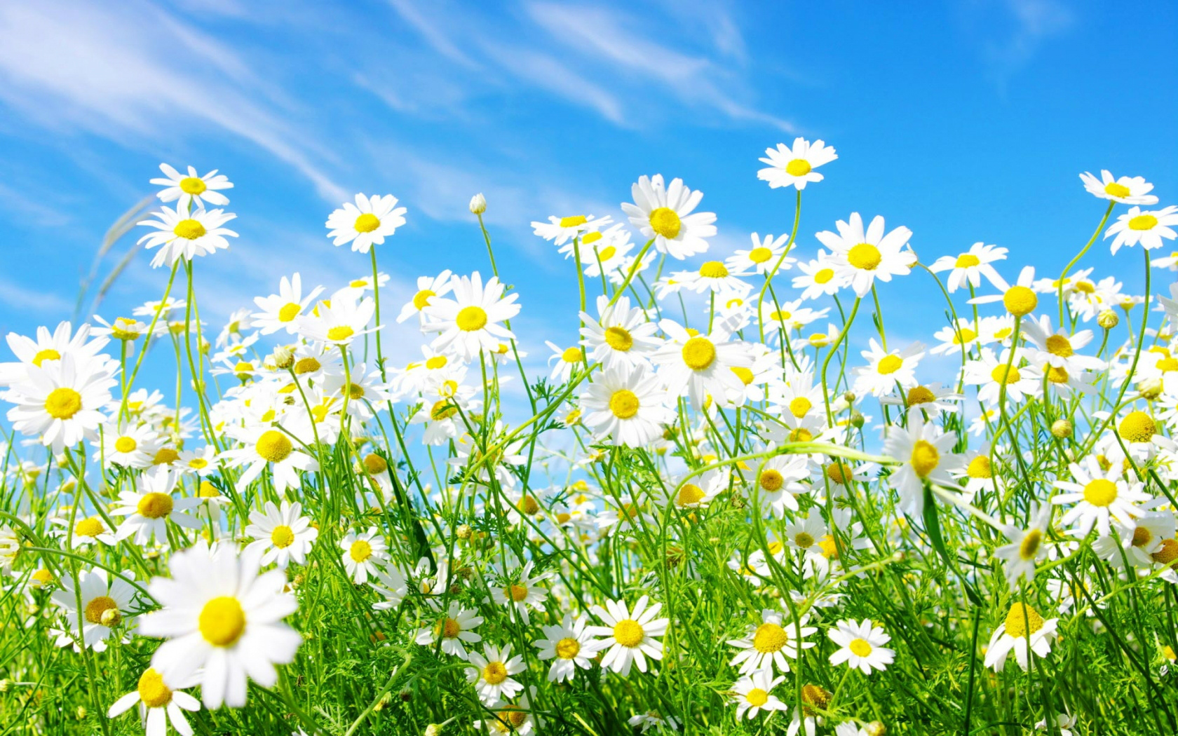 hd spring backgrounds
