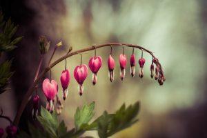 heart flower nature
