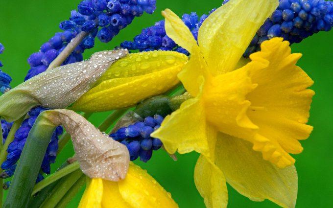 hyacinth flowers nature