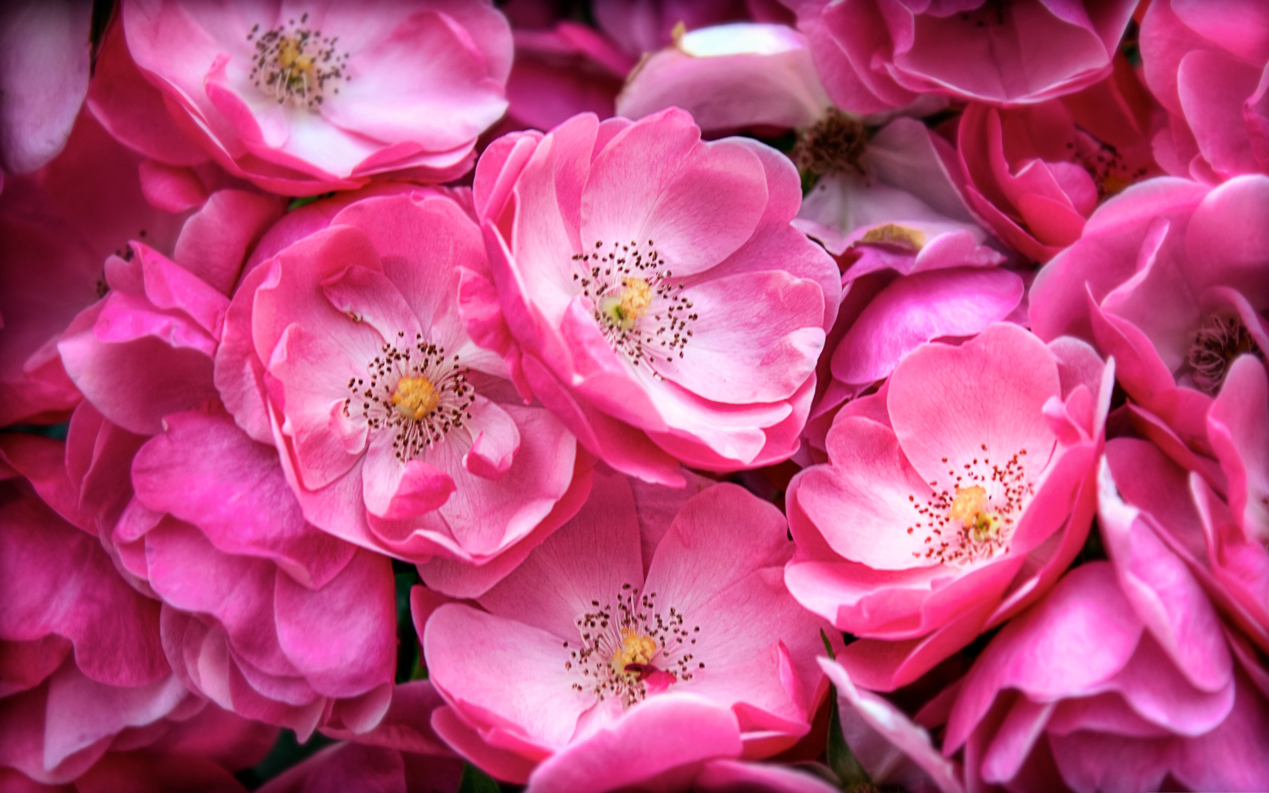 image of pink flower
