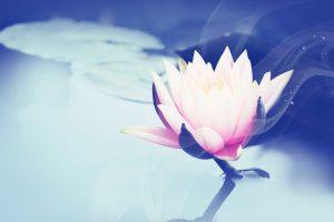 images lotus flower