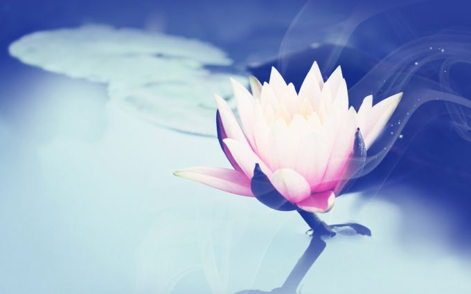 images lotus flower