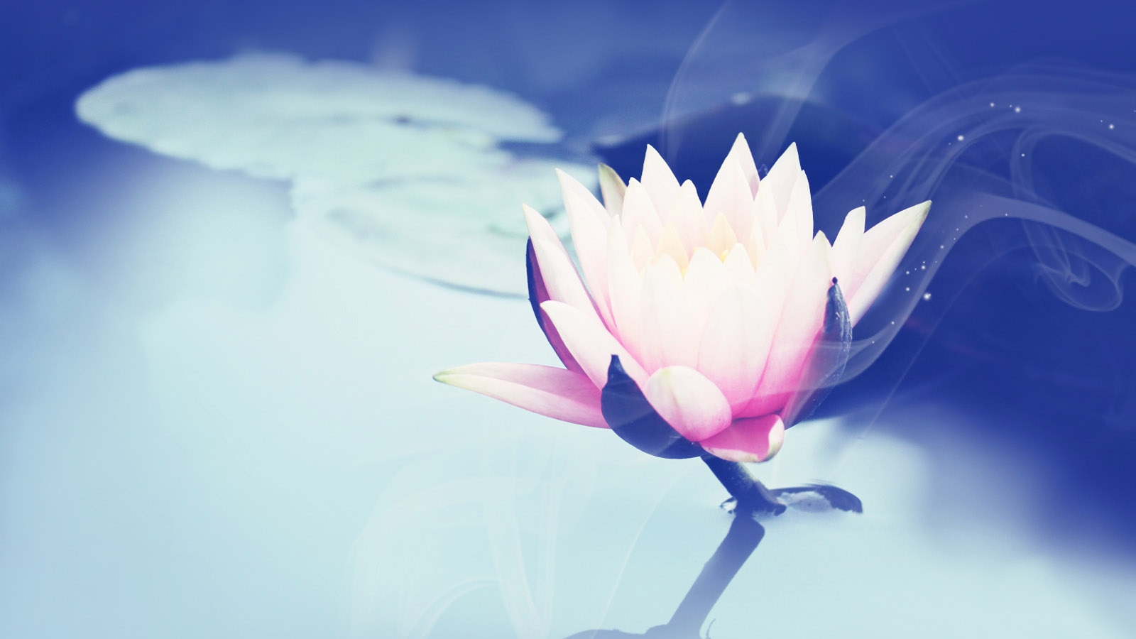 http://hddesktopwallpapers.in/wp-content/uploads/2015/11/images-lotus-flower.jpg