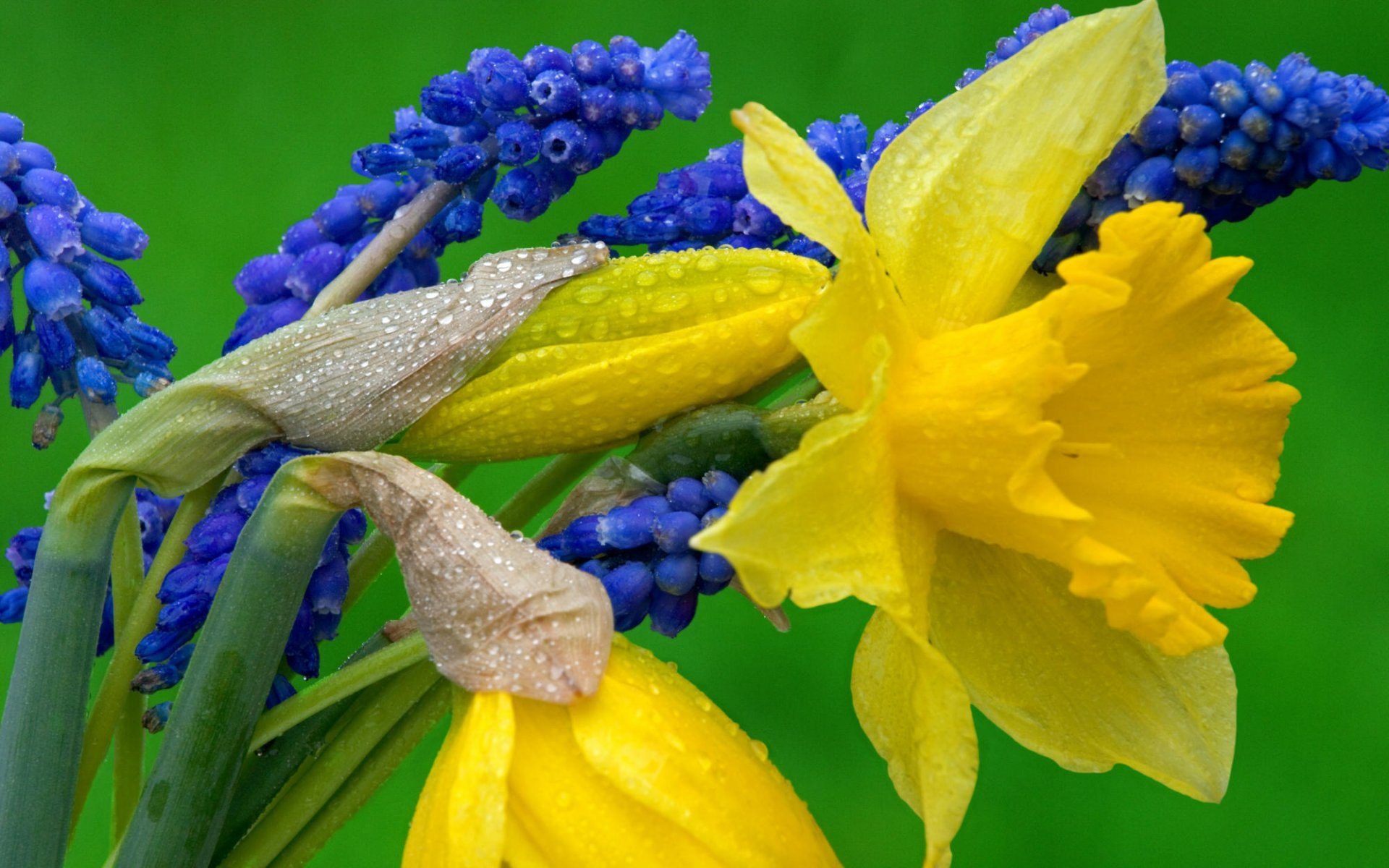 images of daffodil flowers