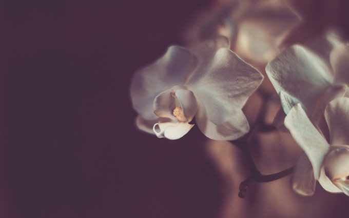 images of orchid flowers