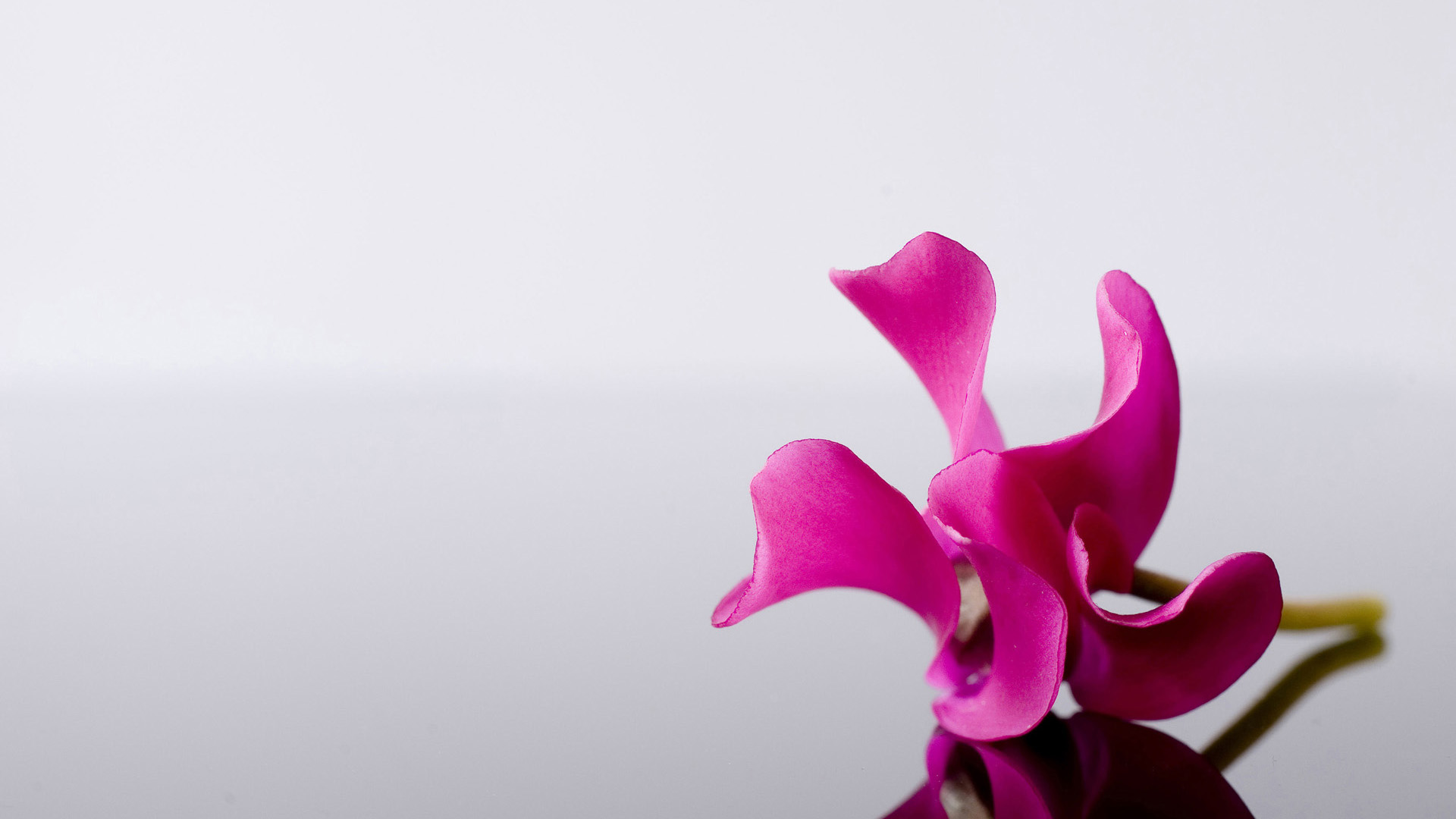 images of pink flower