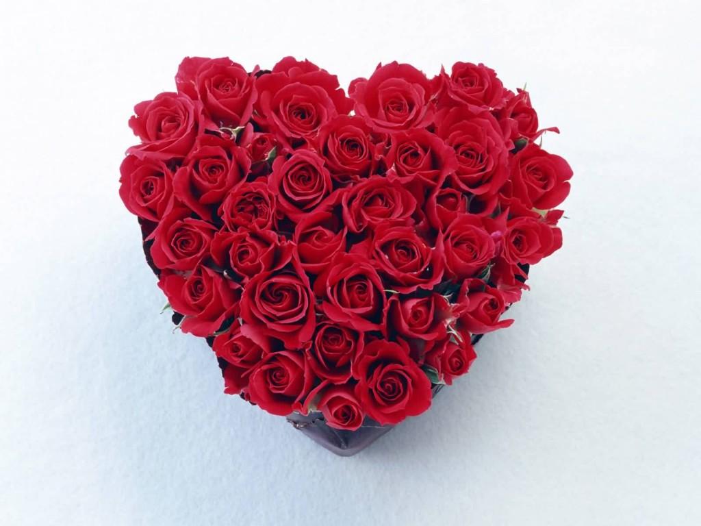 images of rose wallpaper