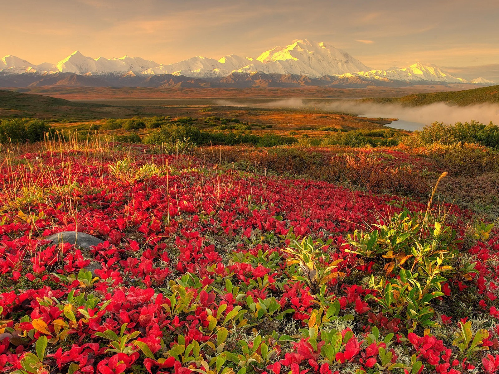 landscape wallpaper flowers