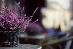 lavender colour wallpapers