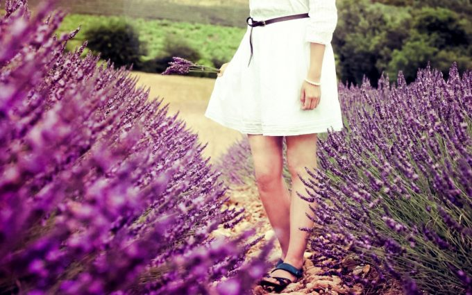 lavender purple field