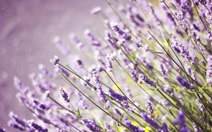 lavender wallpaper for bedroom