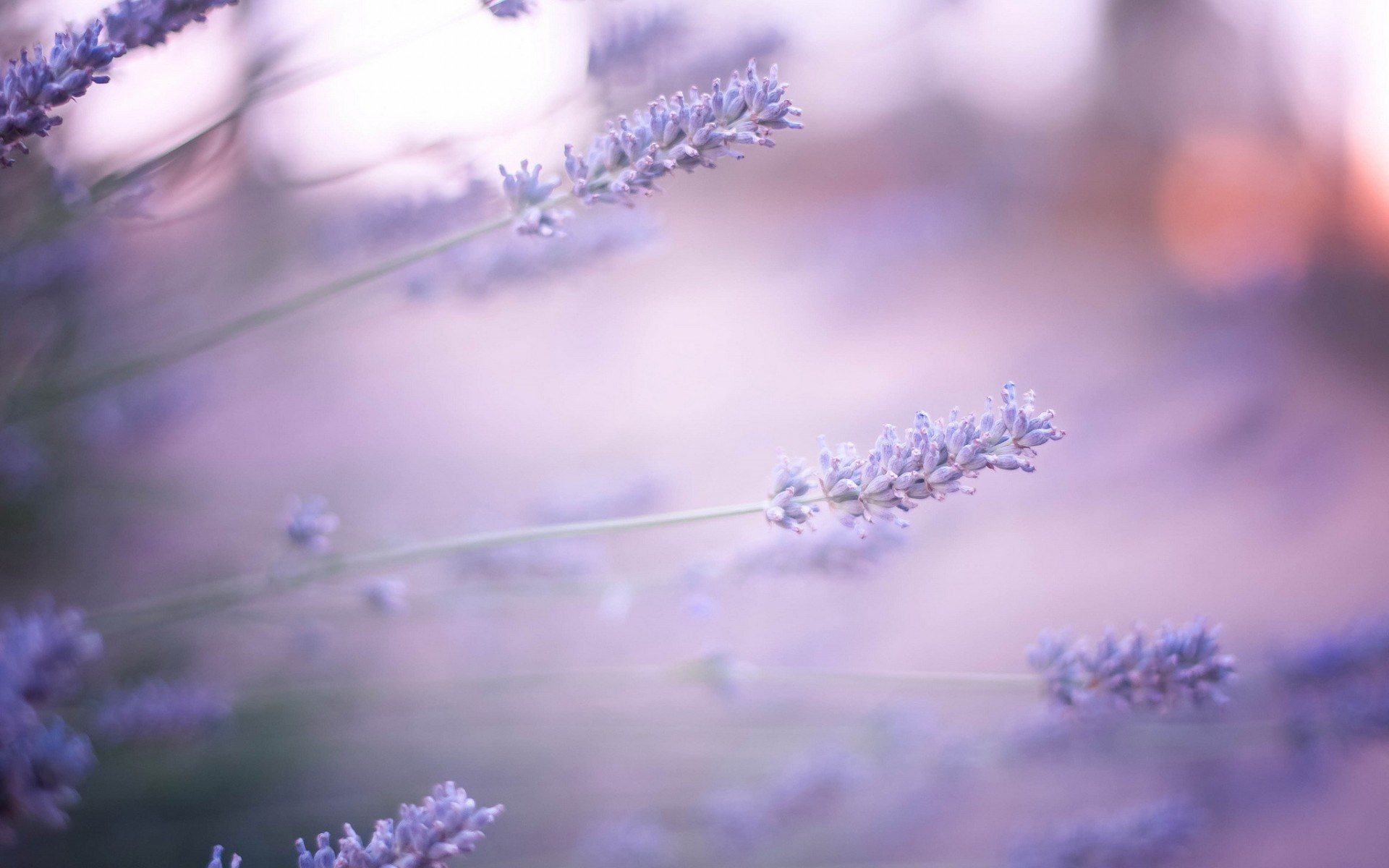 lavender wallpaper hd - HD Desktop Wallpapers | 4k HD