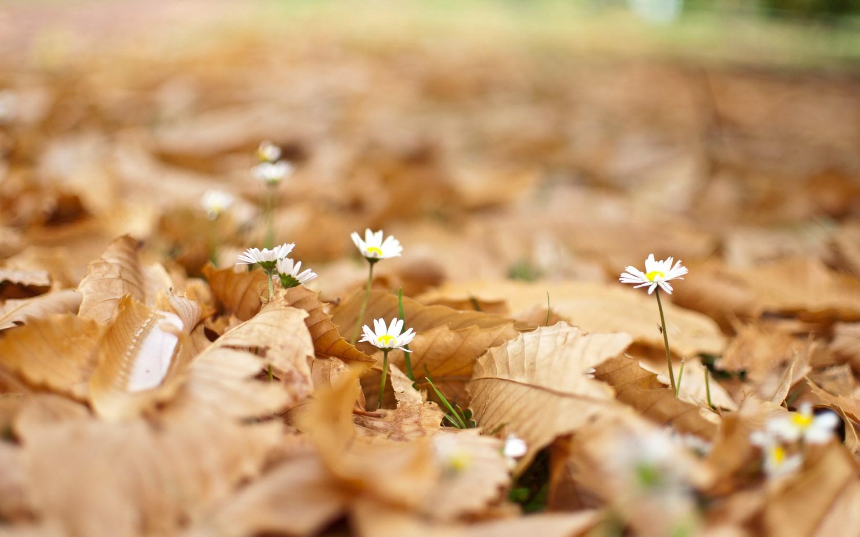 leaves flowers autumn nature