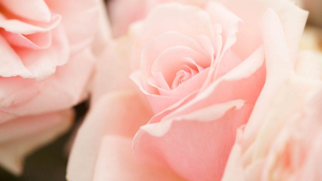 light pink wallpaper desktop - photo #21