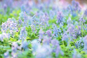 lilac wallpaper A2