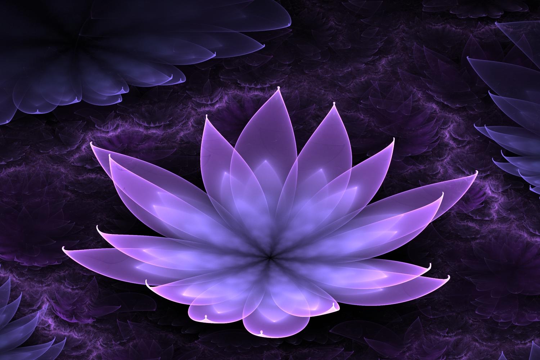 lotus flower images free
