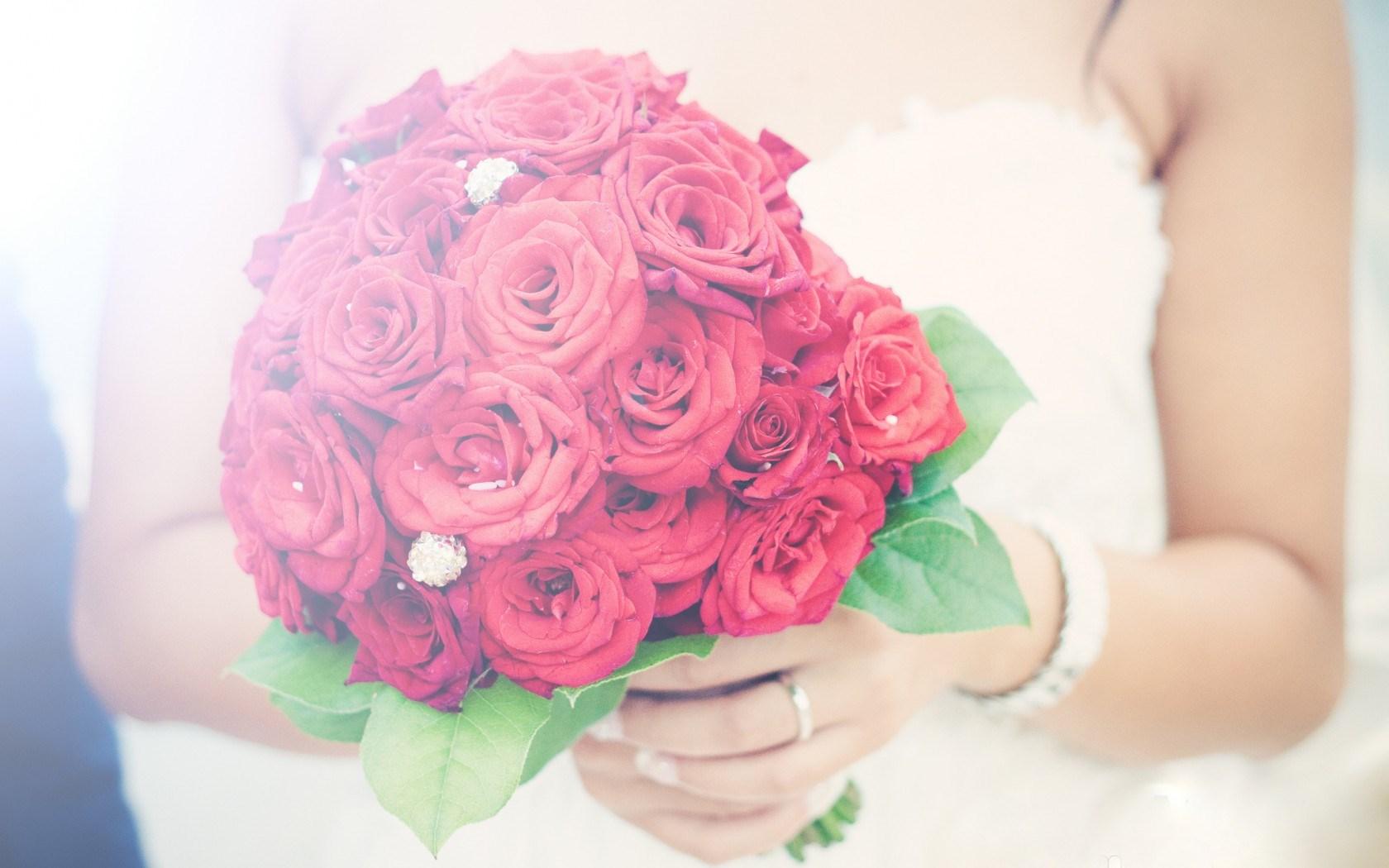 love rose wallpapers