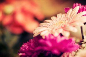 lovely flowers hd macro