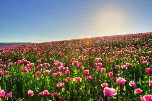 lovely flowers meadow