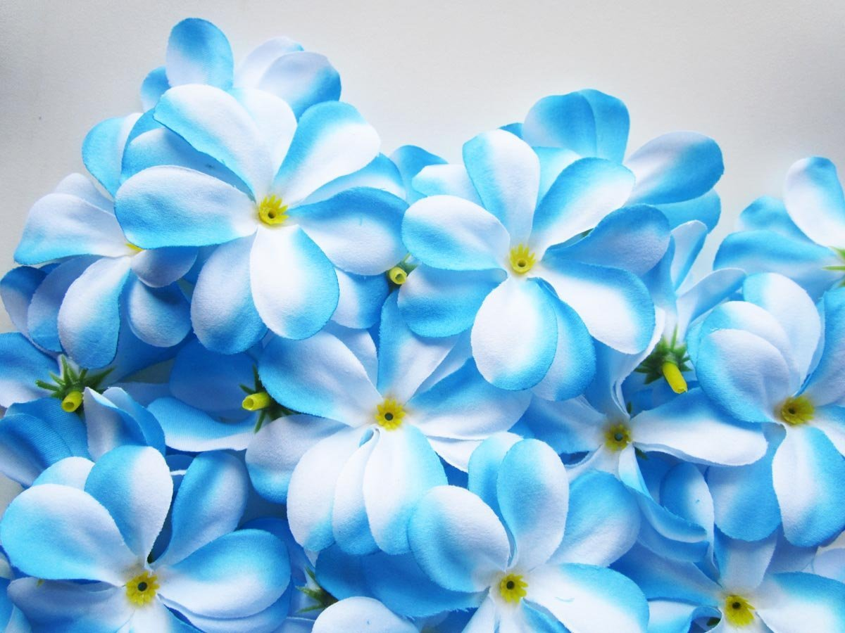 lovely flowers pictures