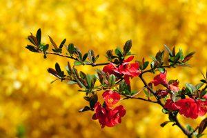 lovely flowers spring