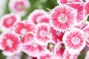 lovely flowers summer