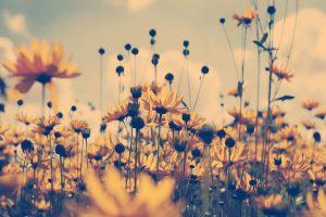 macro amazing flowers