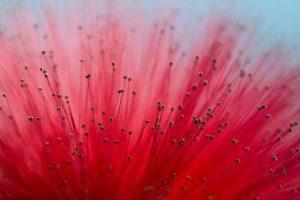 macro flower red