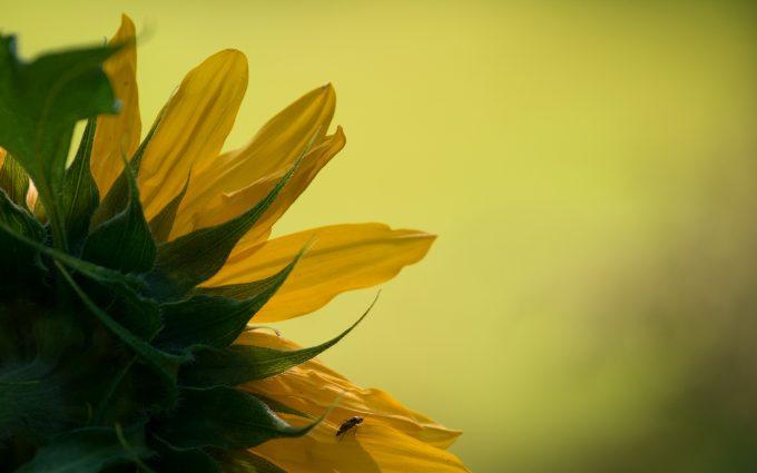macro flowers A2