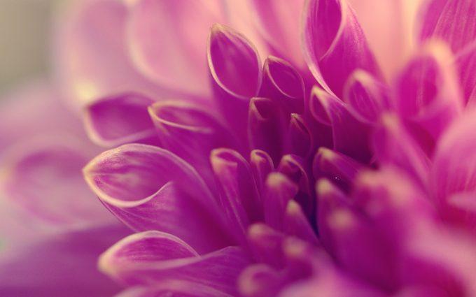 macro flowers A4