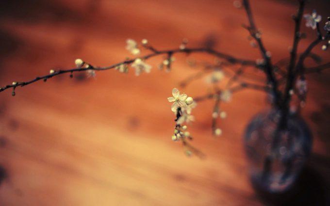 macro flowers A6