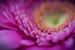 macro flowers hd