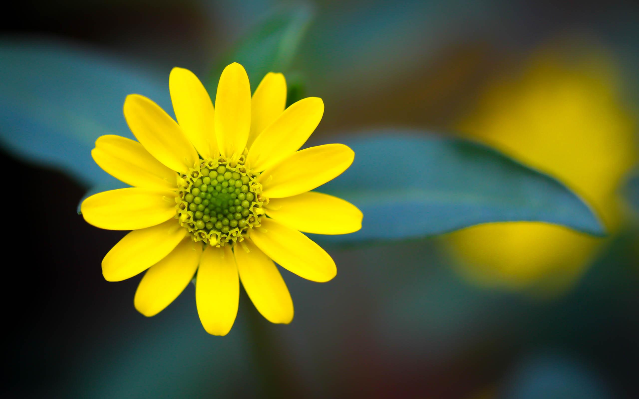 Macro Flowers Hd Yellow - HD Desktop Wallpapers