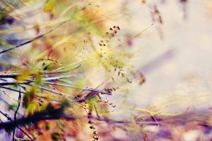 macro flowers wallpaper A7