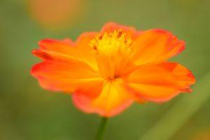 macro wallpaper orange