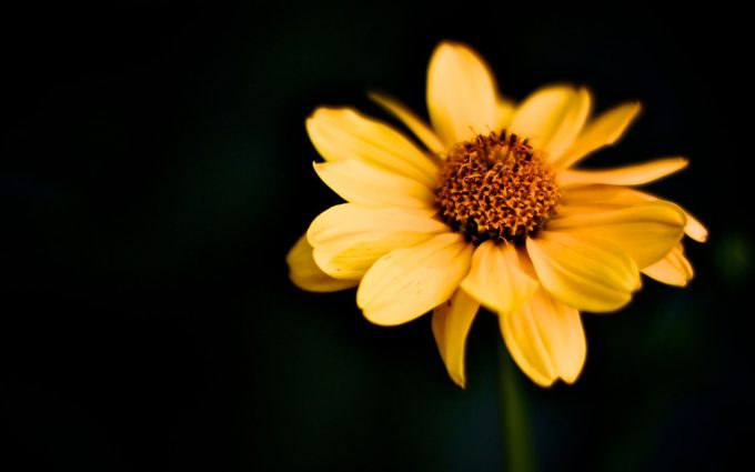 macro wallpaper yellow A4