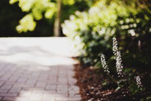 macro white flowers