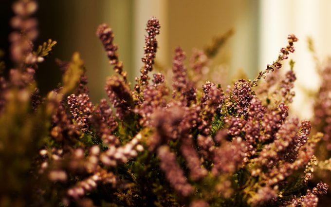 nature plants wallpaper