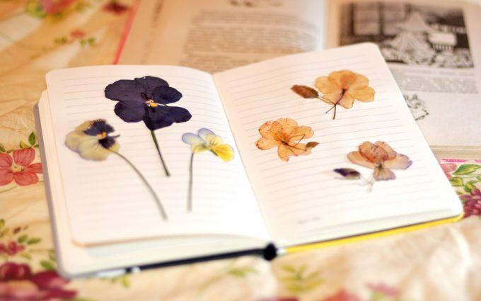 notebook notepad flowers herbarium