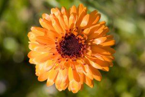 orange flower A2