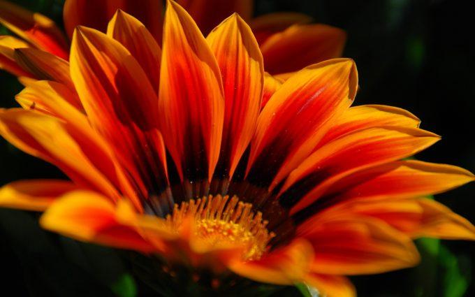 orange flower cool