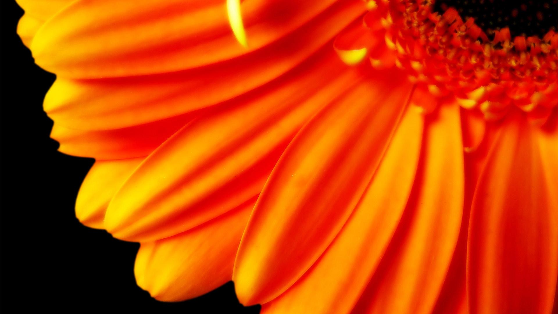orange flower hd images