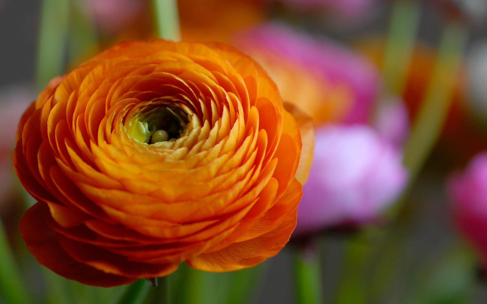 orange flower unique