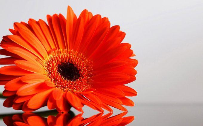 orange flowers lovely