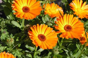 orange flowers splendid